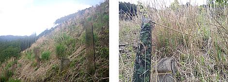 保全活動の約1ヶ月前の森