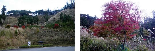 植林されている木々の紅葉
